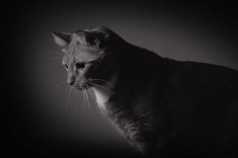 Lemmikkipotretti, sävytetty mustavalkoinen