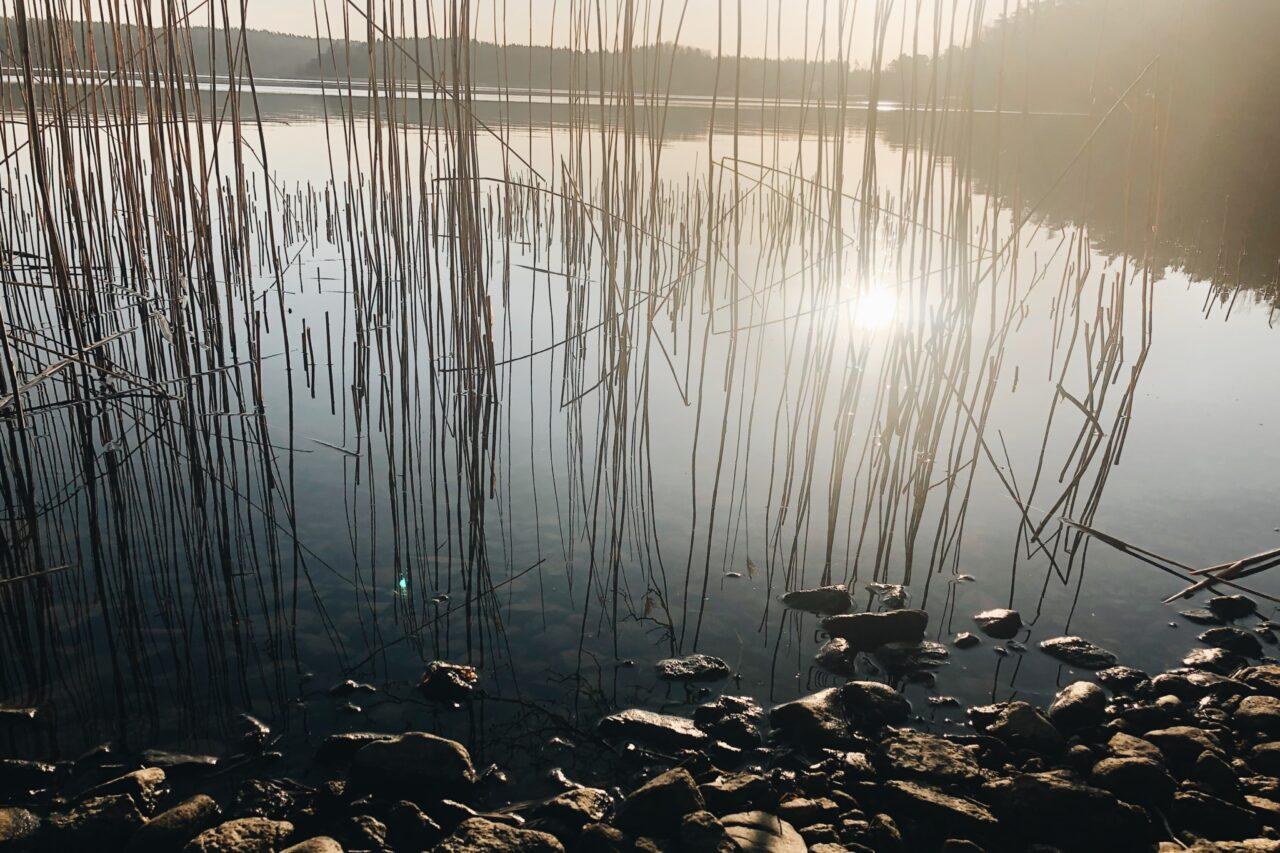 Auringonnousun heijastus merestä kaislojen välissä