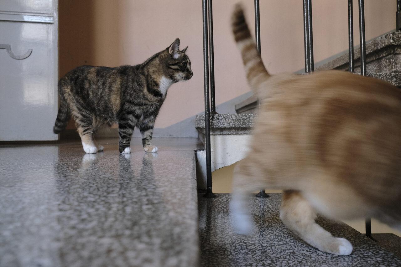 Kissat rappukäytävässä