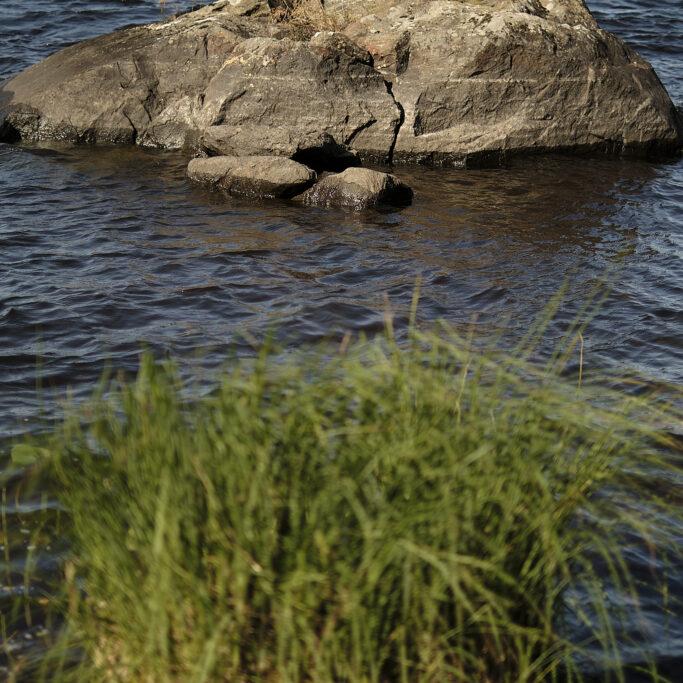 Kivi ja kaisloja järvessä