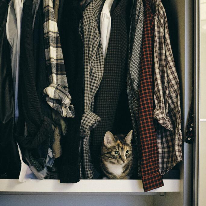 Kissa kurkistaa vaatekaapista