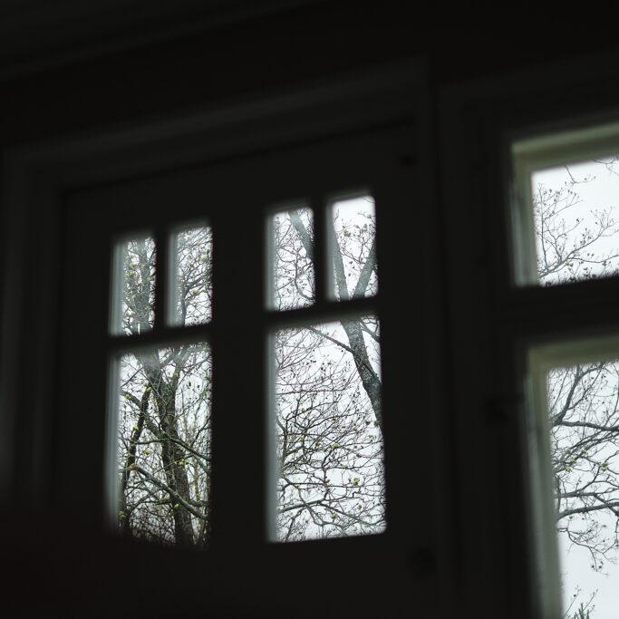 Lehdettömiä puun oksia ikkunan takana