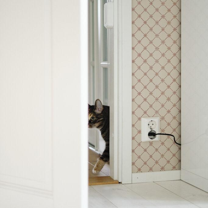 Kissa ovenraossa