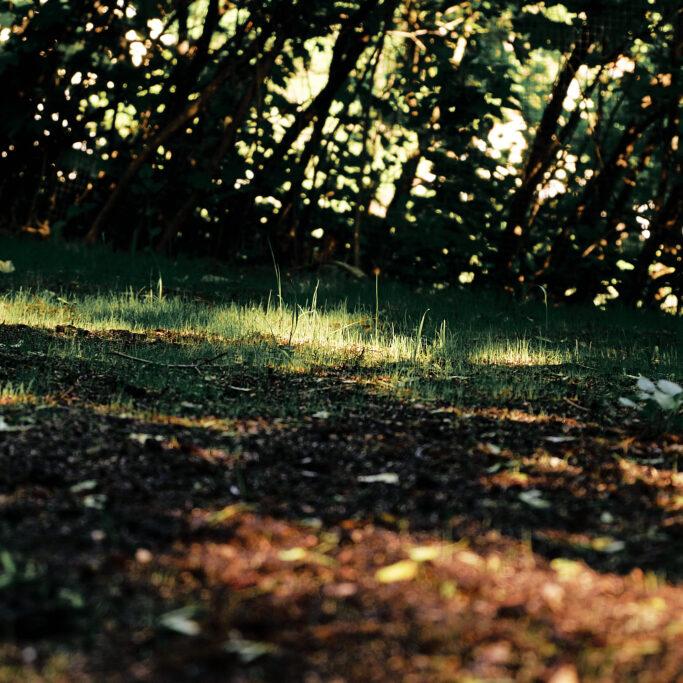 Kylvetty nurmikko auringossa