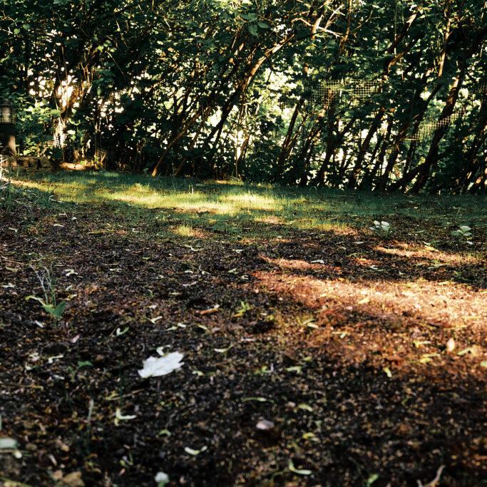 Kissa ja kylvetty nurmikko