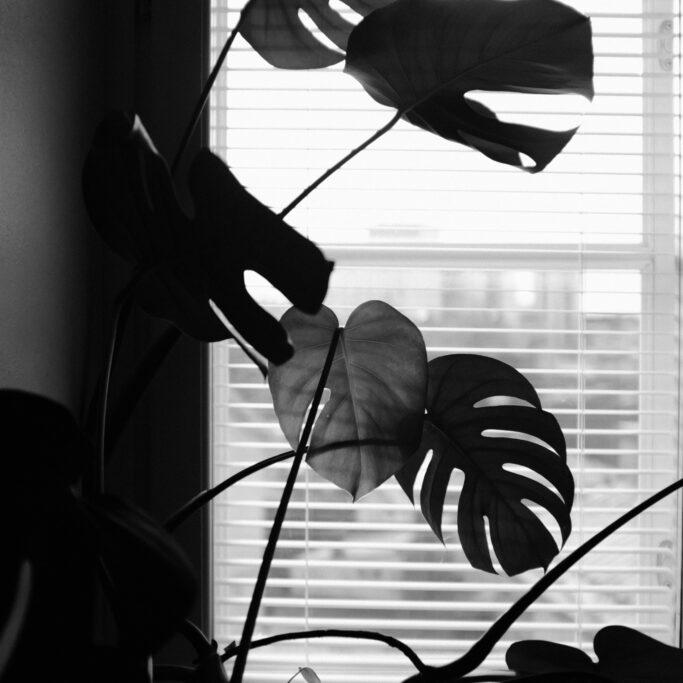 Kasvi ja sälekaihtimet ikkunassa